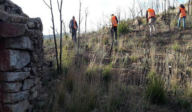 ASEMFO y la siembra forestal